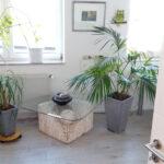 Behandlungszimmer mit Pflanzen