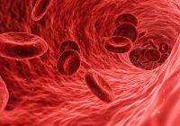 Blutzellen als Animation